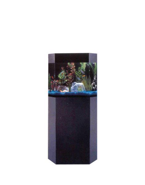 Šešiakampis-Plokščianugaris-akvariumas-FB3